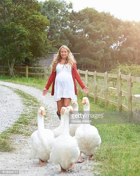 Pregnant woman on farm herding flock of geese.
