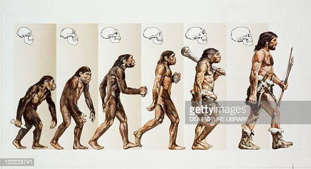Prehistory Hominid evolution through time Drawing