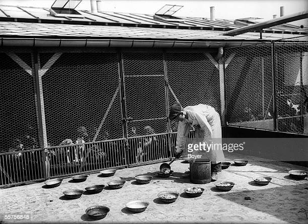 Preparation of the food for the refuge for dogs ' GordonBennett ' Gennevilliers 1910