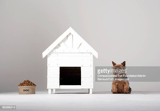Presentation of dog food, a dog house and a dog