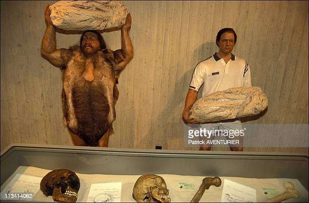 Presentation Of NewlyDiscovered Neanderthal Man Fossilized Bones On March 20th 1999 In Mettmann Germany