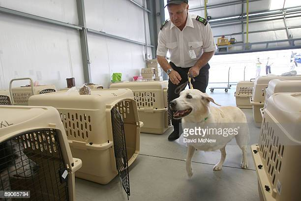 President and CEO Don Weisel helps a threelegged dog to its crate before the southern California maiden voyage of Pet Airways on July 16 2009 in the...