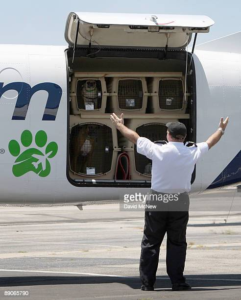 President and CEO Don Weisel raises his arms before a planeload of dogs asking them if everyone is ready to go to Chicago before the southern...