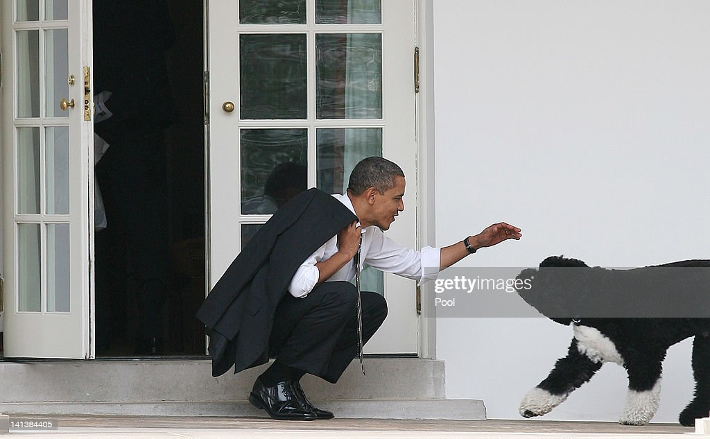 U.S. President <a gi-track='captionPersonalityLinkClicked' href=/galleries/search?phrase=Barack+Obama&family=editorial&specificpeople=203260 ng-click='$event.stopPropagation()'>Barack Obama</a> greets his dog Bo outside the Oval Office of the White House March 15, 2012 in Washington, DC. Obama spoke today at Prince Georges Community College about energy.