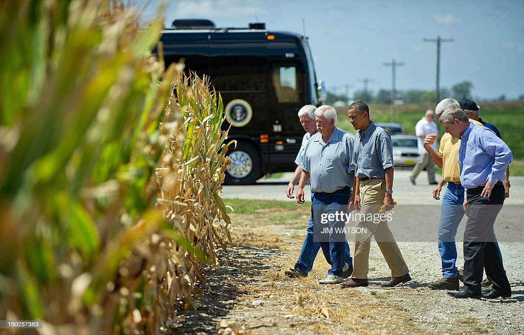 US President Barack Obama (3rd L) inspects drought-stricken corn with farmer Roger McIntosh (2nd L) and US Secretary of Agriculture Tom Vilsack (R) as he visits the McIntosh farm in Missouri Valley, Iowa, on August 13, 2012. AFP PHOTO/Jim WATSON
