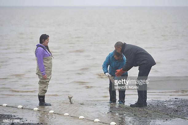 US President Barack Obama looks at salmon being picked up by fishers on Kanakanak Beach in Dillingham Alaska on September 2 2015 AFP PHOTO/MANDEL NGAN