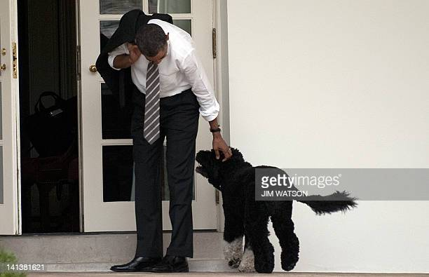 US President Barack Obama pets the family dog Bo upon his return to the White House in Washington DC on March 15 2012 AFP PHOTO/Jim Watson