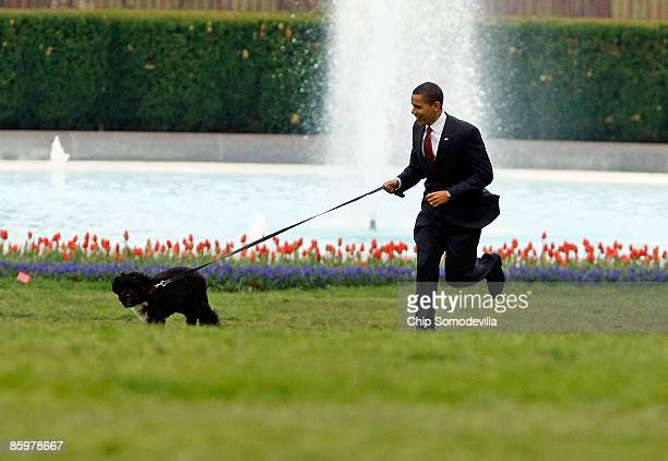 S President Barack Obama runs with his family's new dog a Portuguese water dog named Bo on the South Lawn of the White House April 14 2009 in...