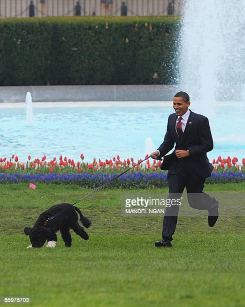 US President Barack Obama runs with the new family dog Bo a Portuguese water dog on April 14 2009 on the South Lawn of the White House in Washington...