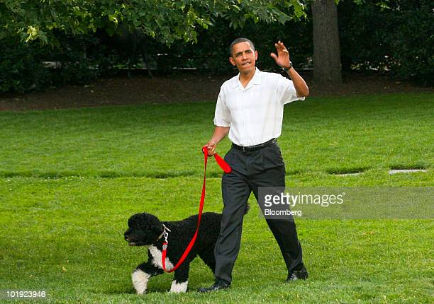 US President Barack Obama walks his pet dog Bo to host a picnic for members of Congress on the South Lawn of the White House in Washington DC US on...