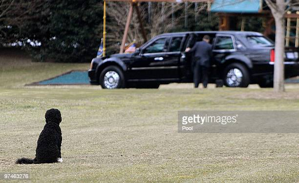 US President Barack Obama's family dog 'Bo' waits for the president on March 5 2010 in Washington DC Obama earlier today in Virginia delivered...