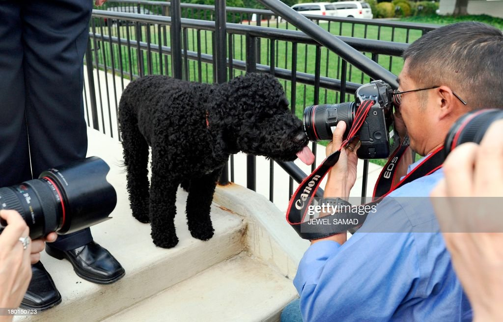 US President Barack Obama's family dog Sunny, a Portuguese water dog who arrived at the White House on August 19, 2013 and was born in June 2013, is mobbed by journalists as she walks around near the press briefing room at the White House in Washington on September 9, 2013. AFP PHOTO/Jewel Samad