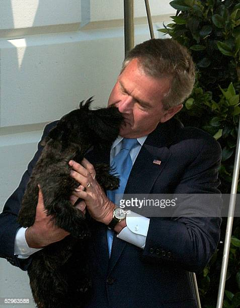 US President George W Bush gets a welcoming lick from Miss Beezley the youngest of his two dogs after he arrived at the White House aboard the Marine...