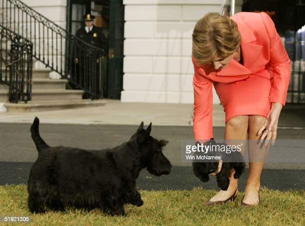 Presidential dog Barney prepares to acquaint himself with Miss Beazley the Scottish Terrier pup given to US first lady Laura Bush as a birthday...