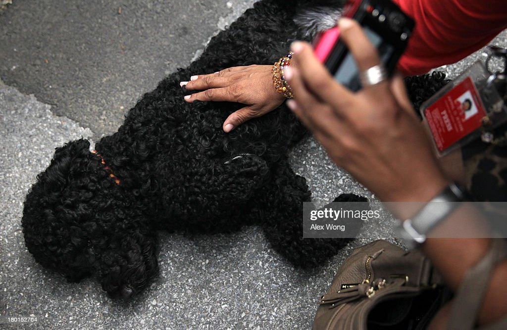 Presidential dog Sunny is pet by a member of the White House Press Crops outside the White House Press Room as she is brought out for a walk by her handler September 9, 2013 at the White House in Washington, DC. Sunny joined the Obama family on August 19, 2013.