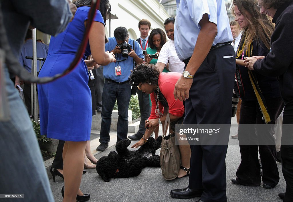 Presidential dog Sunny is pet by April D. Ryan of American Urban Radio Networks as other members of the White House Press Crops look on outside the White House Press Room as she is brought out for a walk by her handler September 9, 2013 at the White House in Washington, DC. Sunny joined the Obama family on August 19, 2013.