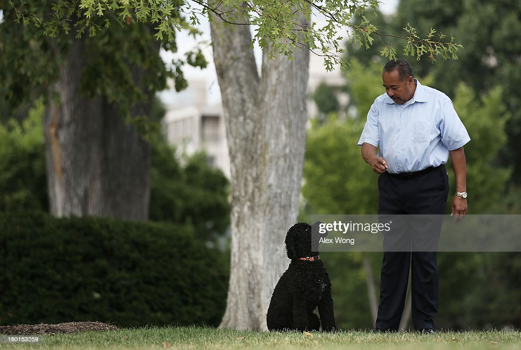 Presidential dog Sunny with her handler as she is brought out for a walk September 9, 2013 at the White House in Washington, DC. Sunny joined the Obama family on August 19, 2013.