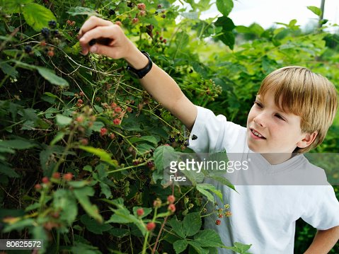 blackberries childhood and boy The 7th earl of rosse,  what was your world like as a little boy  my world as a little boy was pretty simple because most of my childhood was spent during.