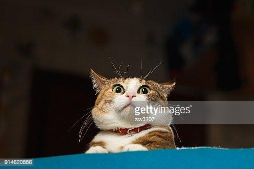 Pretty ginger cat pricked up ears in the alert : Foto de stock