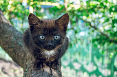 small pretty black kitten in a spring fruit garden. Cozy home life. Green spring garden and pets