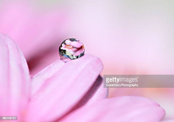 Pretty Pink Droplet