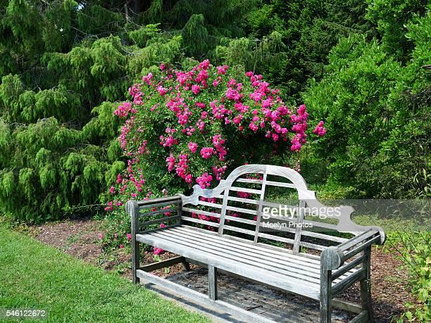 Pretty Place to Relax-Rose Garden Niagara Falls-Canada
