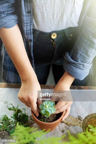 De jolies plantes en pot-le cadeau idéal