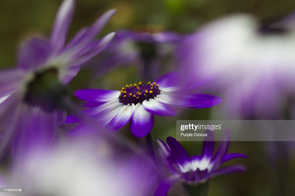 Pretty purple : Stock Photo