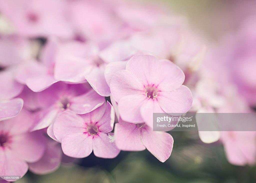 Pretty Purple : Stock Photo