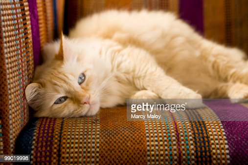 Pretty yellow tabi cat laying on couch.  : Stock Photo