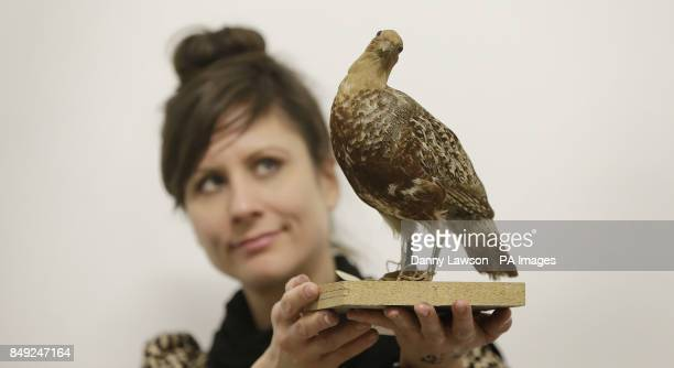 Previously unissued photo dated 18/12/12 of Glasgow Museum employee Anna Lehr holding a partridge at the Glasgow Museum Resource Centre representing...