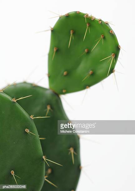Prickly pear cactus, close-up
