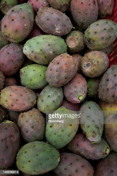 Prickly pears from a cactus sit in a pile on the Nopal plantation in Villanueva Mexico on Wednesday June 20 2012 Gross domestic product will expand...