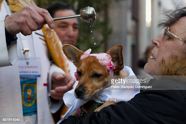 A priest blesses a dog during Saint Anthony day at San Anton Church on January 17 2017 in Madrid Spain During San Anton day people bring their pets...