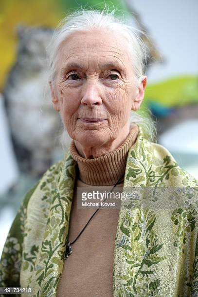 Primatologist and anthropologist Jane Goodall attends the Vanity Fair New Establishment Summit at Yerba Buena Center for the Arts on October 7 2015...