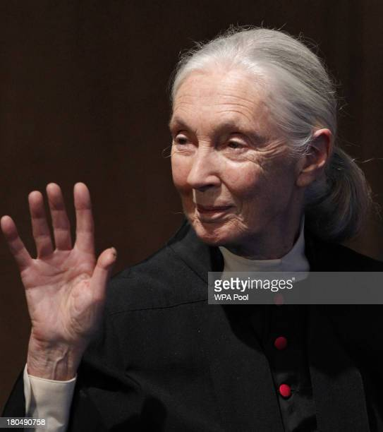 Primatologist Dame Jane Goodall receives an honorary degree at St Andrews University on September 13 2013 in St Andrews Scotland Mrs Clinton is...