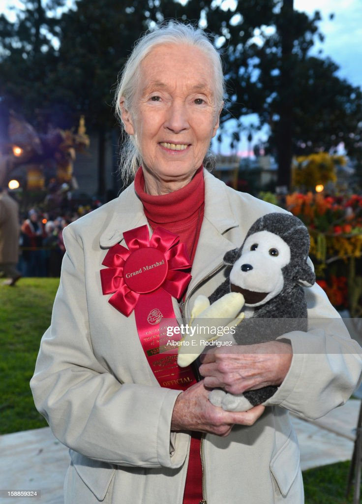 Primatologist Dr. <a gi-track='captionPersonalityLinkClicked' href=/galleries/search?phrase=Jane+Goodall&family=editorial&specificpeople=224034 ng-click='$event.stopPropagation()'>Jane Goodall</a> participates in the 124th Tournamernt of Roses Parade on January 1, 2013 in Pasadena, California.