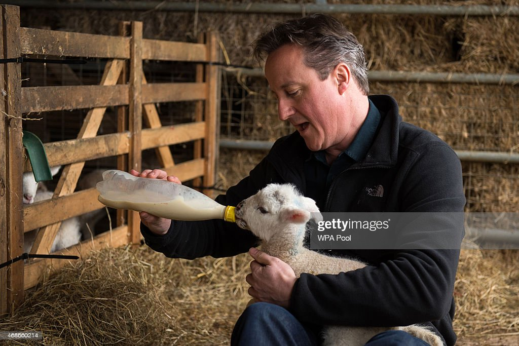 Prime Minister and leader of the Conservative Party <a gi-track='captionPersonalityLinkClicked' href=/galleries/search?phrase=David+Cameron+-+Politician&family=editorial&specificpeople=227076 ng-click='$event.stopPropagation()'>David Cameron</a> feeds orphaned lambs on Dean Lane farm near the village of Chadlington on April 5, 2015 in Chadlington, England. Britain goes to the polls for a general election on May 7.