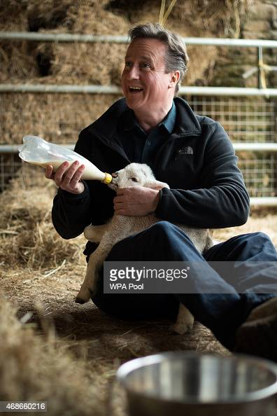 Prime Minister and leader of the Conservative Party David Cameron feeds orphaned lambs on Dean Lane farm near the village of Chadlington on April 5...