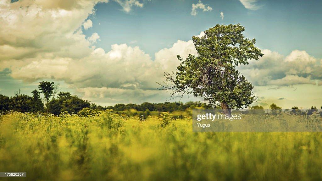 Primrose Pastures