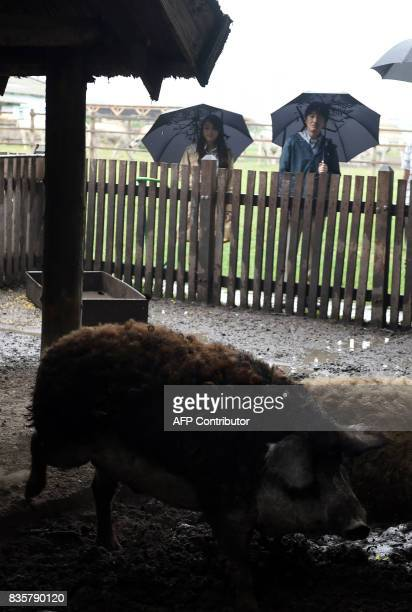 Prince Akishino the 2nd son of Japan's emperor Akihito looks at the Hungarian mangalica pigfamily with his 1st daughter Princess Mako at Bugac Puszta...