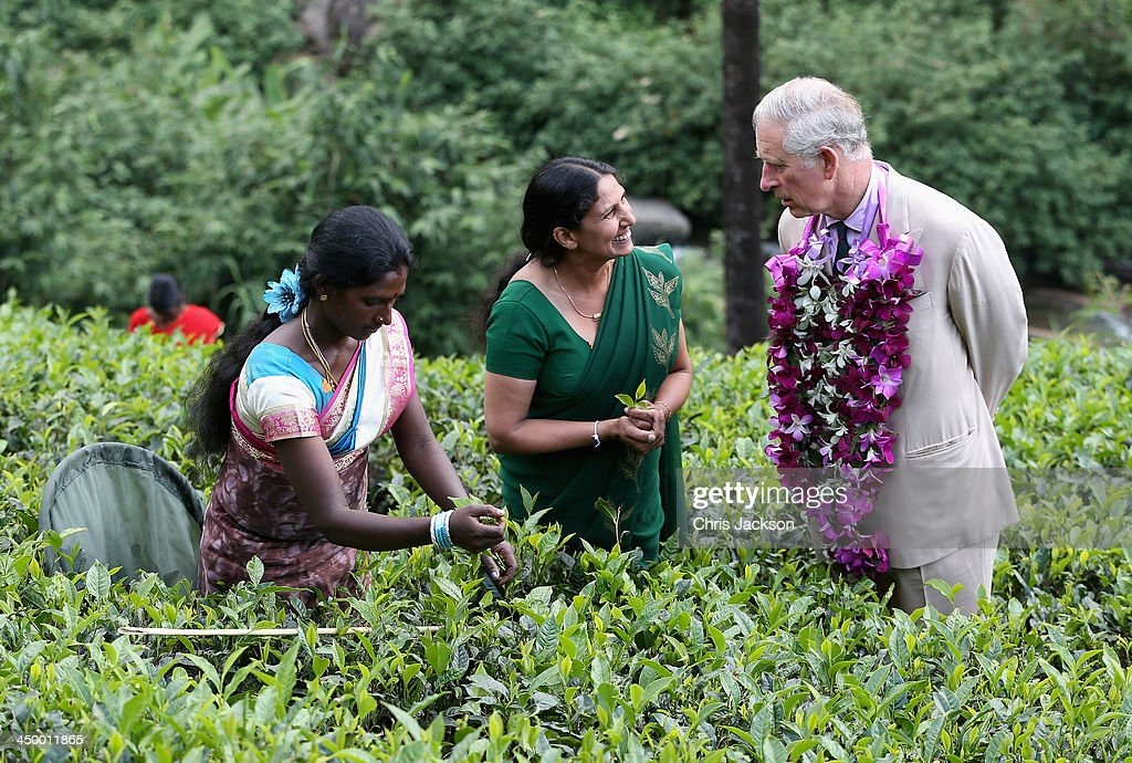 Prince Charles, Prince of Wales visits the Mackwoods Labookellie Tea Estate on Day 3 of a visit to Sri Lanka on November 16, 2013 in Kandy, Sri Lanka. The Royal couple are visiting Sri Lanka in order to attend the 2013 Commonwealth Heads of Government Meeting. Prince Charles, representing the Queen will open the meeting.
