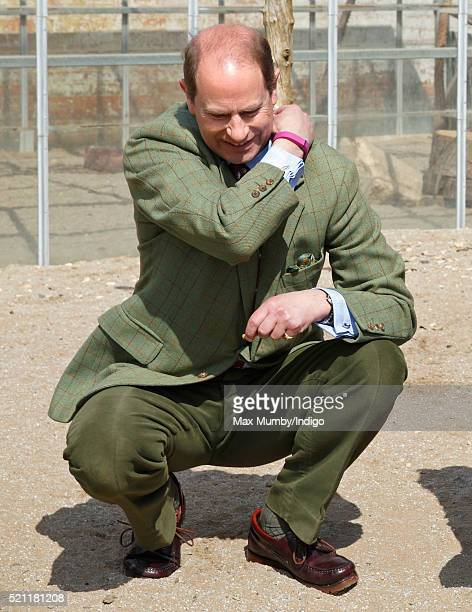 Prince Edward Earl of Wessex tries to wipe a cricket off his back as he feeds meerkats during a visit to the Wild Place Project at Bristol Zoo on...