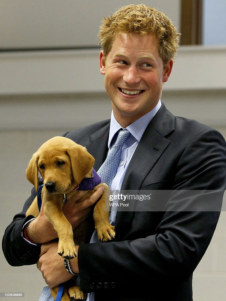 Prince Harry holds an eight week old puppy called Veyron during a visit to the charity Canine Partners Training Centre on July 13, 2010 in Midhurst, United Kingdom.
