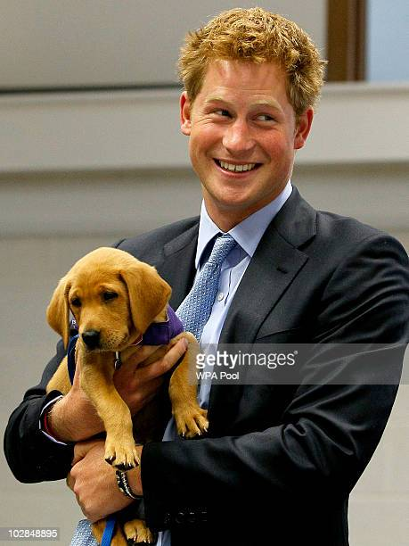 Prince Harry holds an eight week old puppy called Veyron during a visit to the charity Canine Partners Training Centre on July 13 2010 in Midhurst...