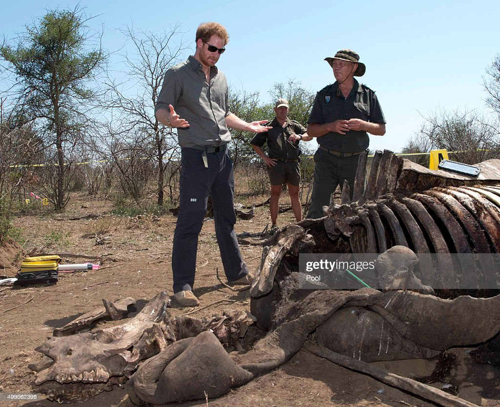 Prince Harry looks at the carcass of a rhino which was killed by poachers in Kruger National Park, on the fifth day of an official visit to Africa on December 2, 2015 in Nelspruit, South Africa.
