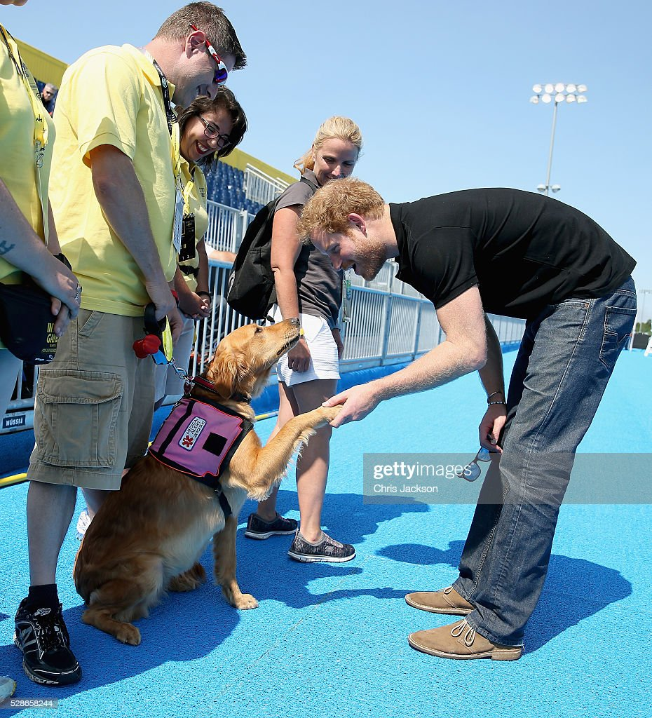 Prince Harry meets Jasmine a medical alert dog for her owner David Romero as he visits venues ahead of Invictus Games Orlando 2016 at ESPN Wide World of Sports on May 6, 2016 in Orlando, Florida. Prince Harry, patron of the Invictus Games Foundation is in Orlando ahead of the opening of Invictus Games which will open on Sunday. The Invictus Games is the only International sporting event for wounded, injured and sick servicemen and women. Started in 2014 by Prince Harry the Invictus Games uses the power of Sport to inspire recovery and support rehabilitation.