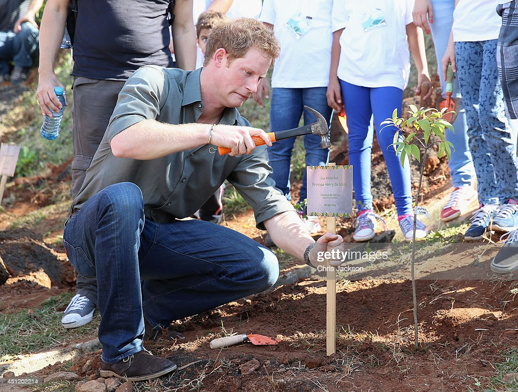 <a gi-track='captionPersonalityLinkClicked' href=/galleries/search?phrase=Prince+Harry&family=editorial&specificpeople=178173 ng-click='$event.stopPropagation()'>Prince Harry</a> plants a tree as he visits Cota 200, a small village in the Brazilian Atlantic Rainforest on June 25, 2014 in Cota Dos Ventos, Brazil. <a gi-track='captionPersonalityLinkClicked' href=/galleries/search?phrase=Prince+Harry&family=editorial&specificpeople=178173 ng-click='$event.stopPropagation()'>Prince Harry</a> is on a four day tour of Brazil that will be followed by Two days in Chile.