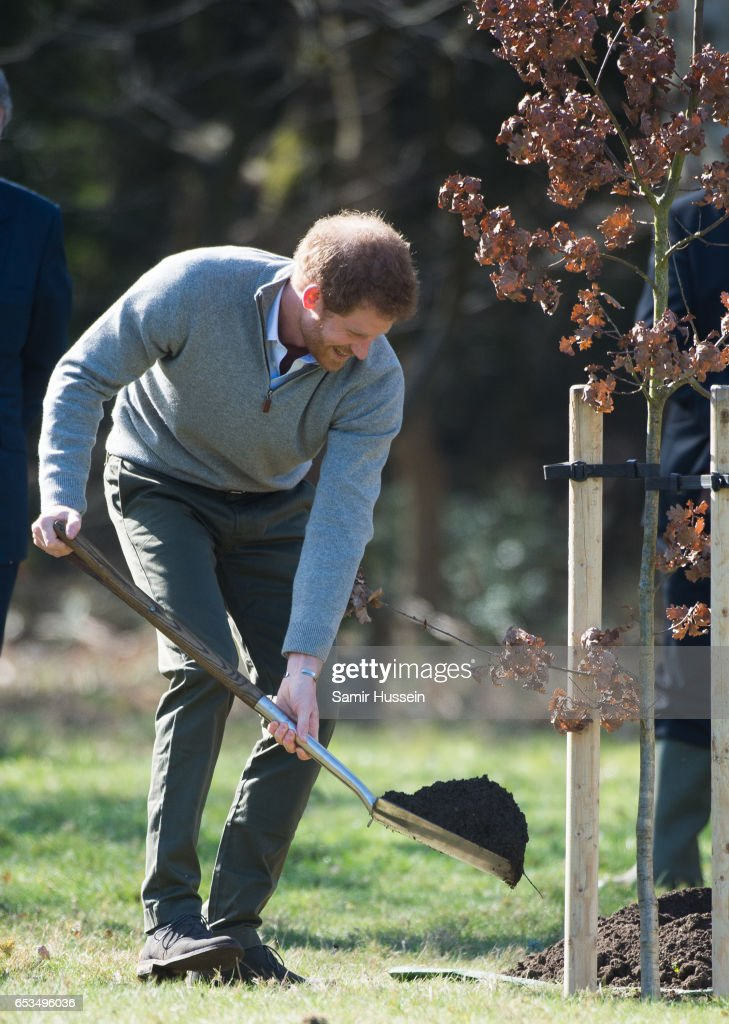 prince-harry-plants-a-tree-during-a-visit-to-epping-forest-to-view-picture-id653496036
