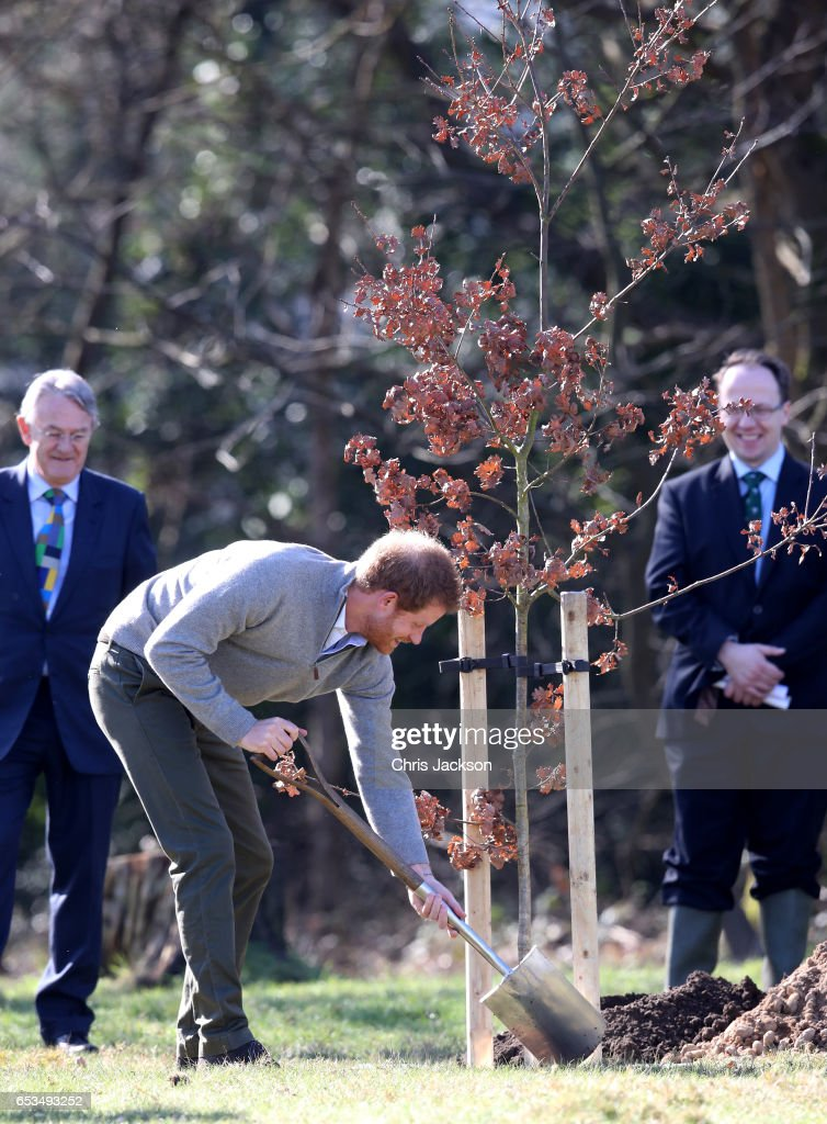 prince-harry-plants-a-tree-during-a-visit-to-the-epping-forest-to-picture-id653493252